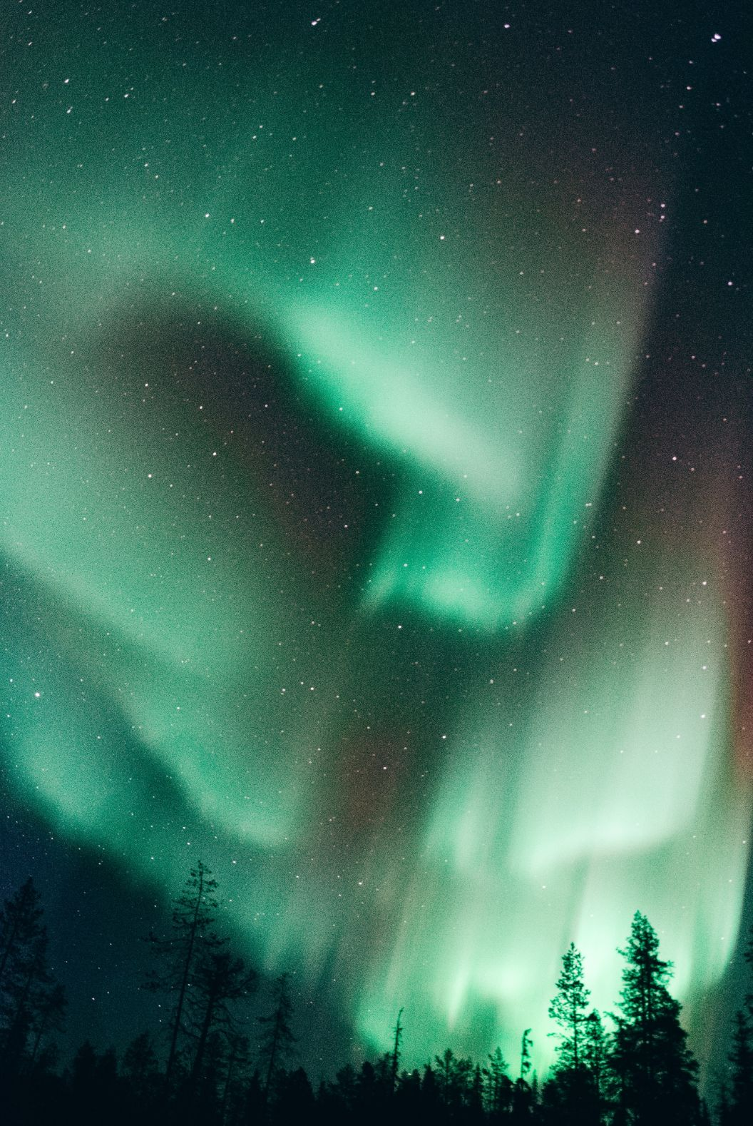 northern lights shining in the starry night sky above dark pine trees in Finnish Lapland