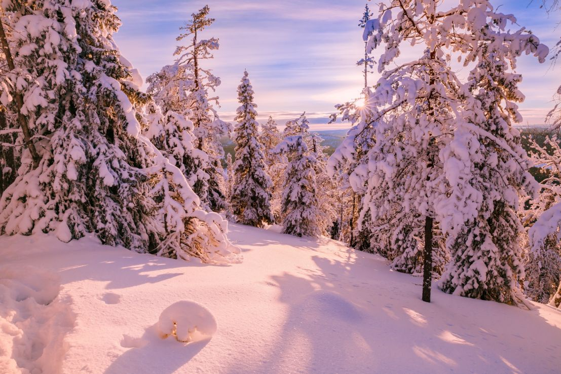 snow covered forest in Finnish Lapland