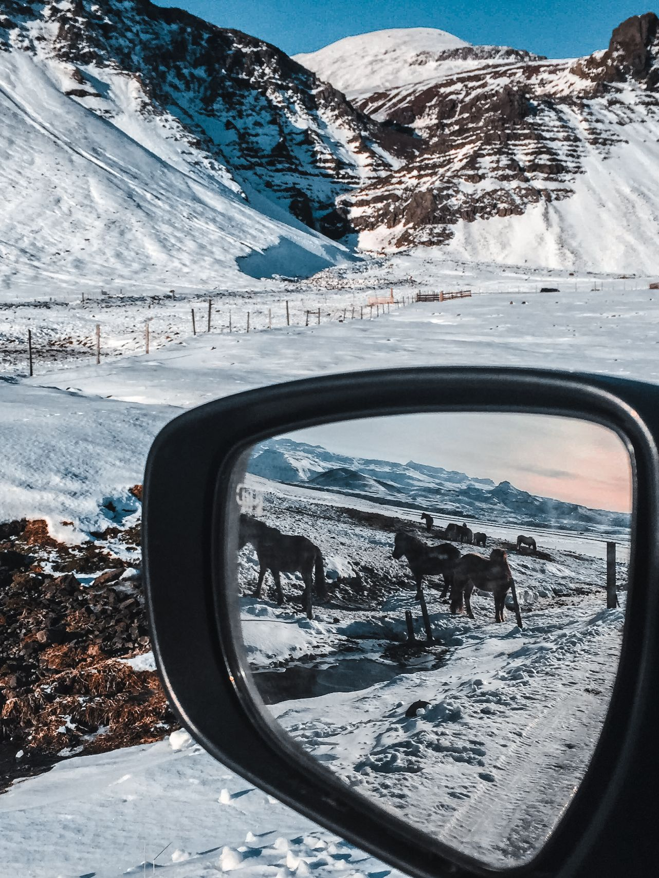 Side mirror view of Icelandic horses in winter with snow and mountains in background during roadside stop in 24 hour Iceland itinerary