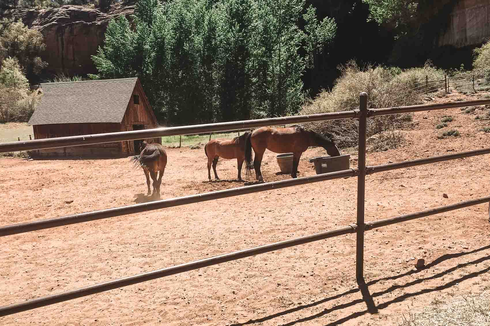 Three horses in a fenced in area near a barn in Best Friends Animal Sanctuary in Utah - bucket list travel