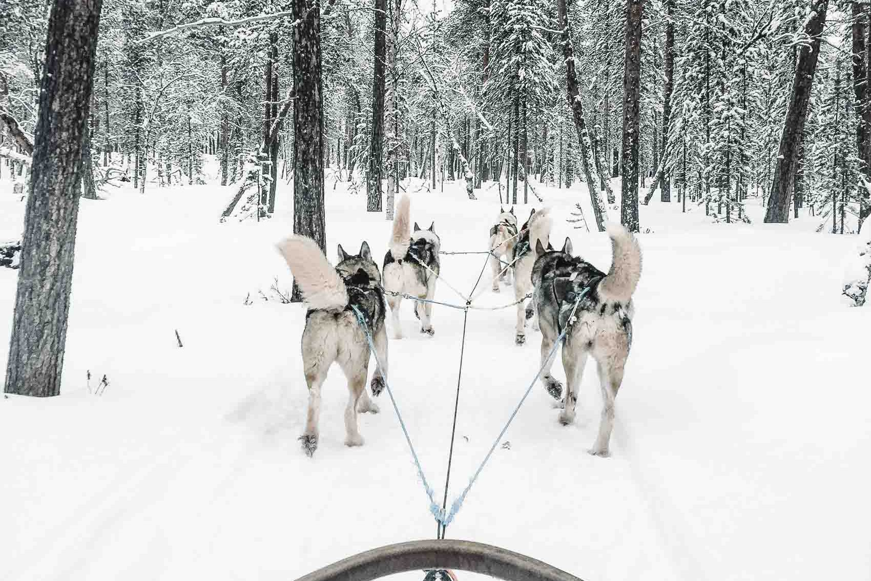dogs pulling sled in snow in finnish lapland - bucket list travel